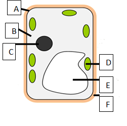 Cell - Structure And Functions CBSE Science Class 8 ...