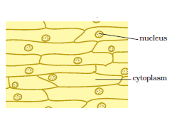 Cell - Structure And Functions CBSE Science Class 8 Chapter