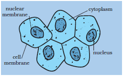 diagram of prokaryotic cell organelle diagram of nerve cell organelles