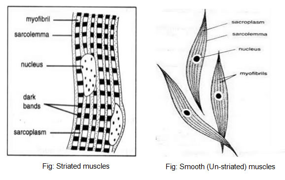 tissues cbse science class 9 ncert solutions